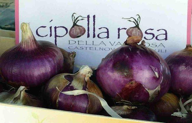 prodotti tipici friulani- cipolla rosa